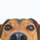 happy-dog-big-eyes