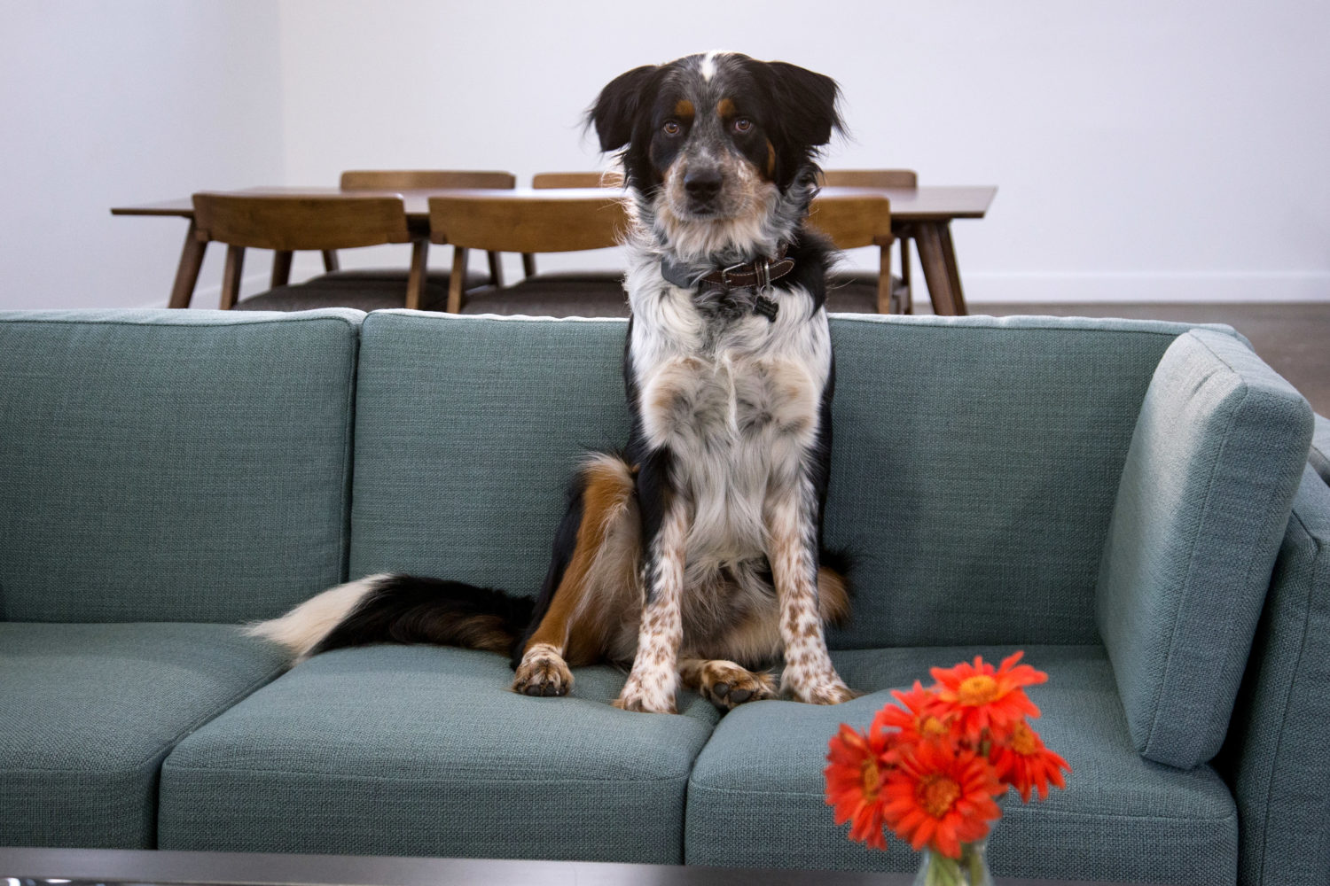 Keep Your Dogs Off Your Couch With The Couch Guard